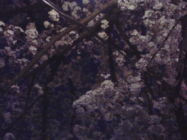 ファイル 179-5.jpg
